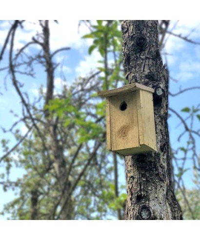 Biodiversity in our orchards
